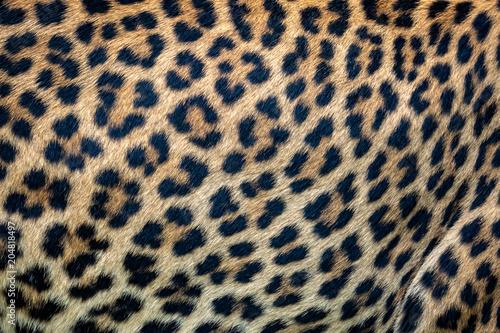 Canvas Prints Leopard Close up leopard fur background. Ceylon leopard skin texture for background.