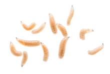Maggot Fly Larva Close Up Isol...