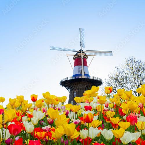 Plakat Holenderskie wiatraki