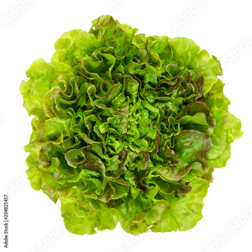 Young Batavia Red lettuce from above. Summer or French crisp. Loose leaf lettuce. Reddish green salad head with crinkled leafs and wavy leaf margin. Lactuca sativa variety. Closeup photo, from above.