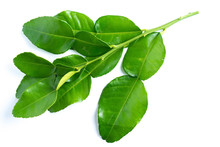 Kaffir Lime Leaves On White