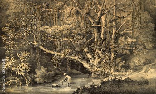 Obraz na płótnie Natura Ameryki Południowej - rycina
