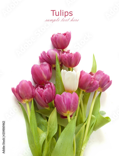 Foto op Plexiglas Tulp beautiful tulips bunch isolated on white background