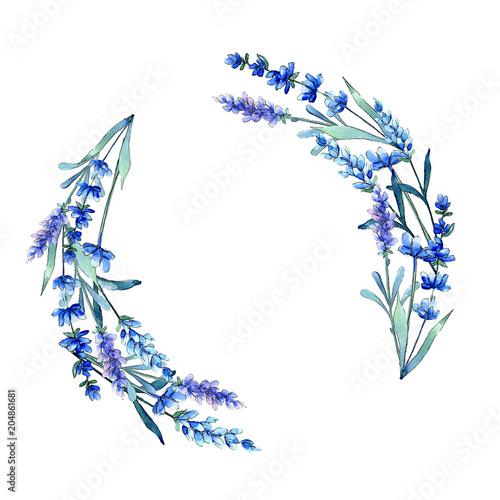 Photo  Blue lavender