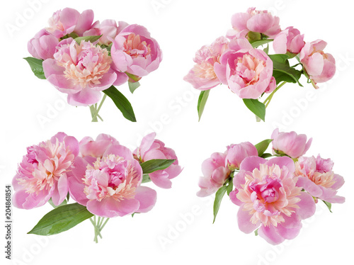 Peony flowers bunch isolated on white background