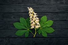 The Inflorescence Chestnut. Medicinal Plants. On A Wooden Background. Top View. Copy Space.