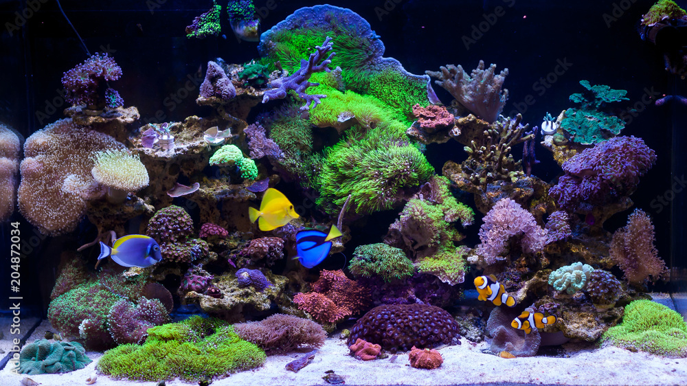 Fototapeta Home Coral reef aquarium