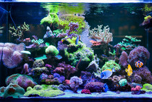 Home Coral Reef Aquarium
