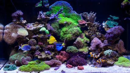 Home Coral reef aquarium