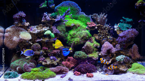 Photo Stands Coral reefs Home Coral reef aquarium