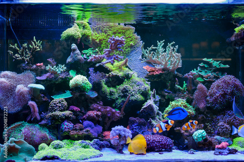 Fotografie, Tablou Home Coral reef aquarium