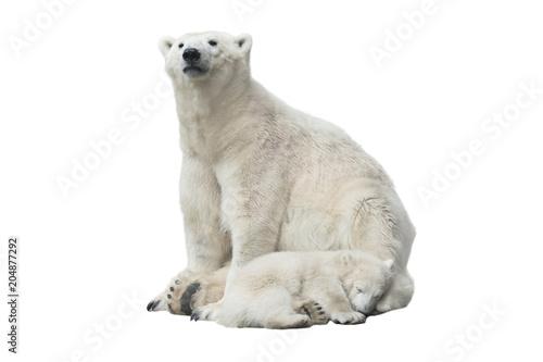 Foto auf Gartenposter Eisbar Polar bear