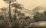 Natura Ameryki Południowej. - 204881003