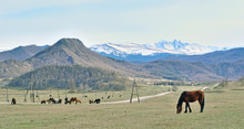 Landscape With Horses In Gorny...