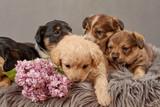 Fototapeta Animals - pies i bez ,pies , psinka, młody piesek, przyjaźń, milusiński, milutki, miły ,słodki, sweet, little dogs, pieski w koszu, kundelki, kundel, szczeniaczki, szczeniaczek, kompozycja, domowe, przyjac