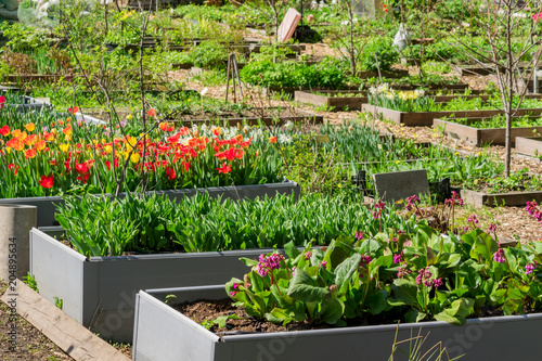 Nice Arrangement Of Plants And Flowers In Garden Beds Outdoors, Rustic Country  Style