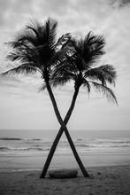Interesting Coconut Tree Cross...