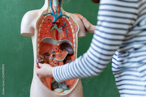 Close up of a high school student learning anatomy in