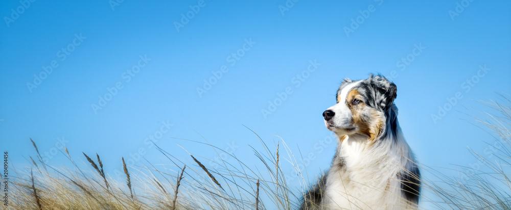 Hund im Seitenprofil vor blauem Himmel mit und Gräsern