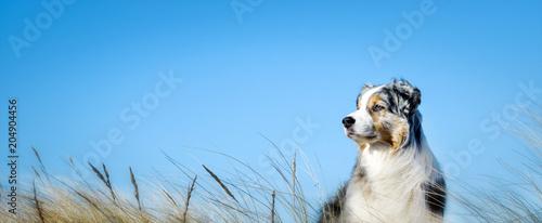 Poster Chien Hund im Seitenprofil vor blauem Himmel mit und Gräsern