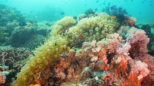 Tuinposter Koraalriffen Tropical fish on coral reef at diving. Wonderful and beautiful underwater world with corals and tropical fish. Hard and soft corals. Philippines, Mindoro.