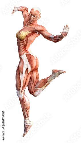 3D Rendering Female Anatomy Figure on White – kaufen Sie diese ...