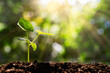 Sprout on blurred green bokeh with soft sunlight background, environmental concept