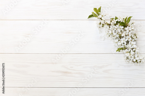 Close-up photo of Beautiful white Flowering Cherry Tree branches Canvas Print