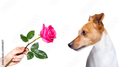 Fotobehang Crazy dog dog valentines rose