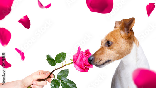 Foto op Canvas Crazy dog dog valentines rose