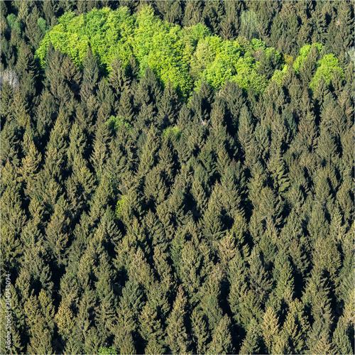 vue aérienne d'une forêt à Lalandelle dans l'Oise en France
