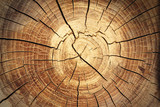 Fototapeta  - background of a wooden stump