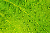 Green leaf with water drops for textured background