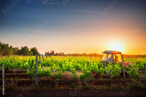 Fotografia  Vines on the field and a red tractor at sunset