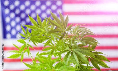 Photographie  cannabis marijuana  American flag