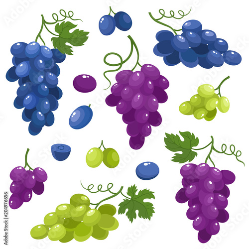 Bright vector set of juice grapes isolated on white background. Fototapete