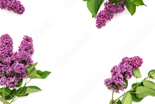 Photo sur Toile Lilac Lilac flowers white background Floral flat lay