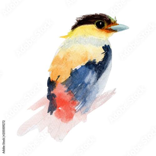 kolorowy-ptak-malowany-akwarela-ptaszek-z-czarno-zolta-glowa
