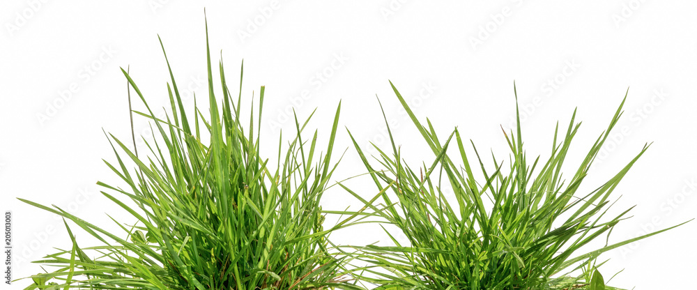 Fototapety, obrazy: two bunches of green grass isolated on white background