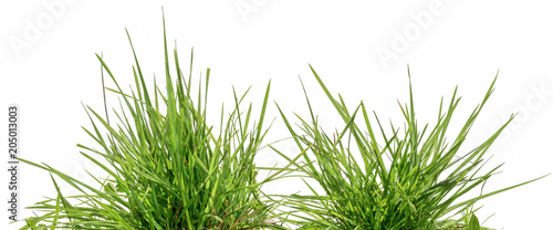 Herbe two bunches of green grass isolated on white background