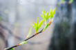 Branches with new leaves in the garden. Selective focus.