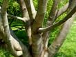 Kahler Baum in grüner Wiese