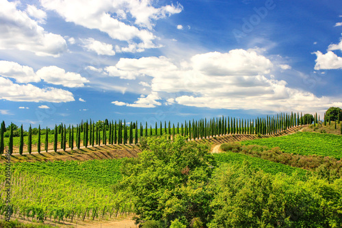 Papiers peints Vignoble Vineyard with row of cypress trees in Val d'Orcia, Tuscany, Italy