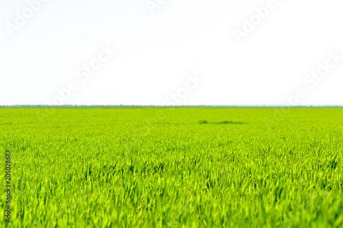 Poster Lime groen beautiful Green field