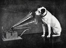 Hund Lauscht In Grammophon Tri...