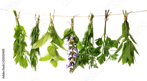 Fotografie, Obraz  Set of fresh herbs hanging  on an isolated white background.