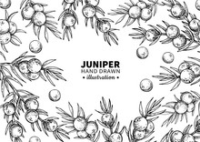 Juniper Vector Drawing Frame. ...
