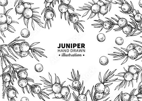 Fototapeta Juniper vector drawing frame. Isolated vintage  template of berr obraz