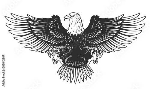 Eagle isolated on white vector illustration. Canvas-taulu