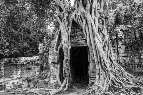 In de dag Asia land Roots of a banyan tree at Ta Prohm temple in Angkor, Siem Rep, Cambodia